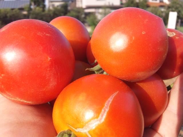トマトと茄子と青空と