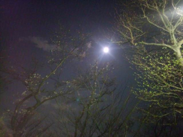 夜桜と坂道ダッシュとアサイーと