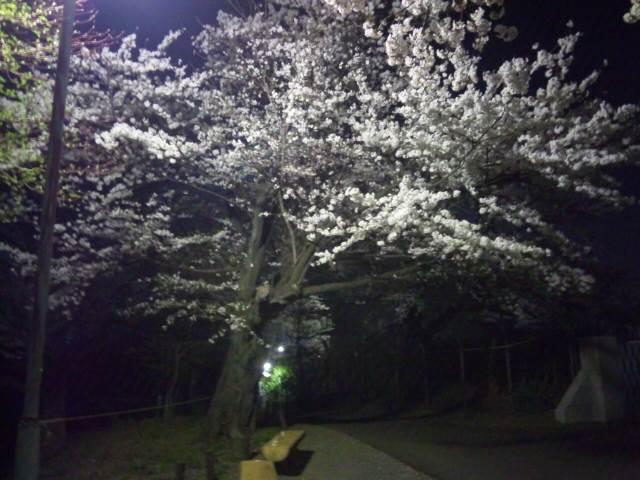 夜桜見物〜