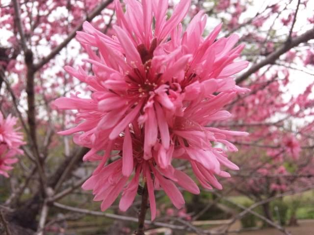 キレイなピンク色ですね〜