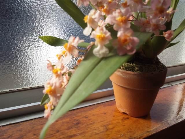 咲きました!!