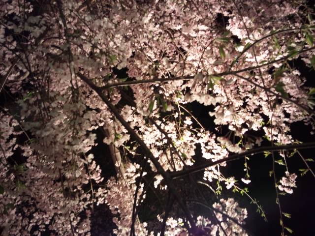 夜桜ラン〜