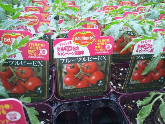 今年のトマトはこれ!