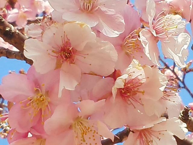 お花見ラン